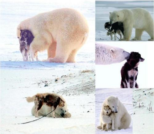 polar+bear_+dog[1].JPG (54 KB)
